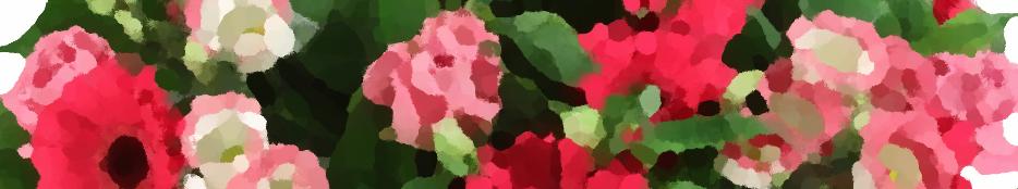 bloemen_felicitatie_01
